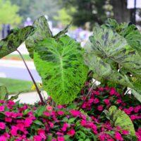 mariana h qubein arboretum and botanical gardens 15164467587 o