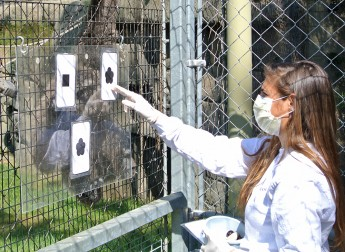 Advanced Cognition in Animals: HPU Professor's Research at GSO Science Center Highlighted
