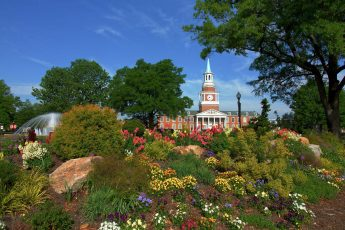 HPU Named Tree Campus Higher Education for 12th Consecutive Year
