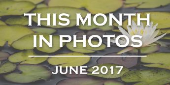 This Month in Photos: June 2017