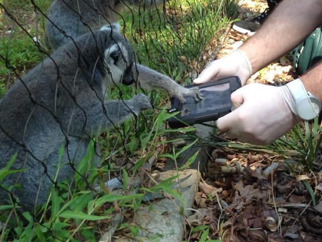 Lemur Testing