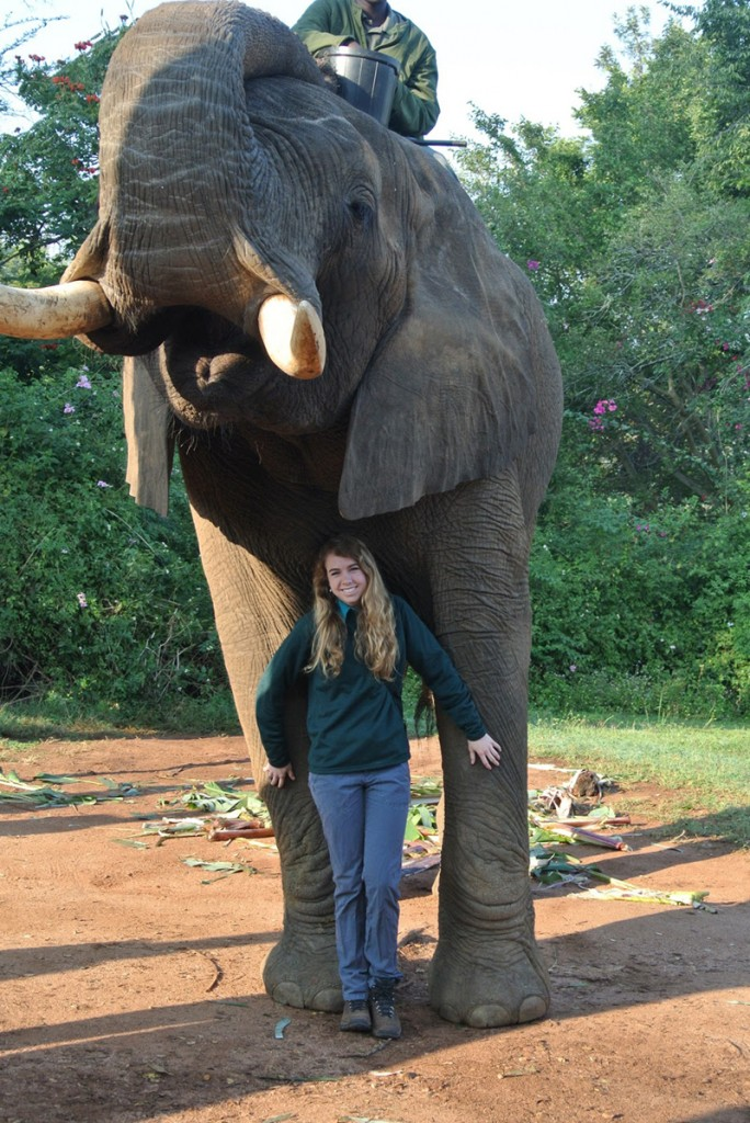 Junior Elizabeth Gambel is pictured with an African elephant during a trip to Elephant Whispers in Mpumalanga. The organization rescues elephants and trains them for educational purposes.
