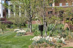 Hayworth park is springing to life